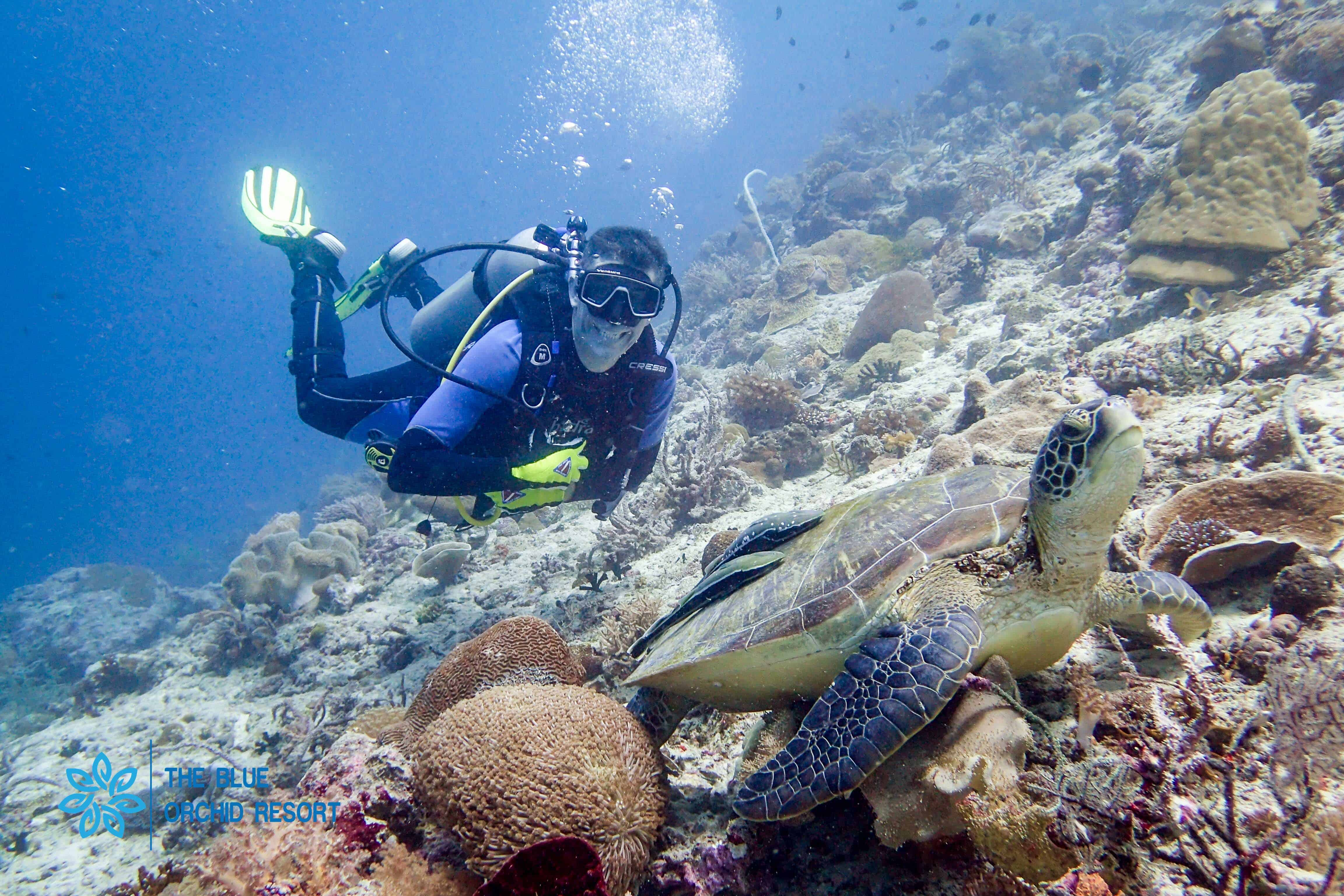 d4b26ed46 Discover the best diving in Moalboal with the Blue Orchid Resort and Dive  Center